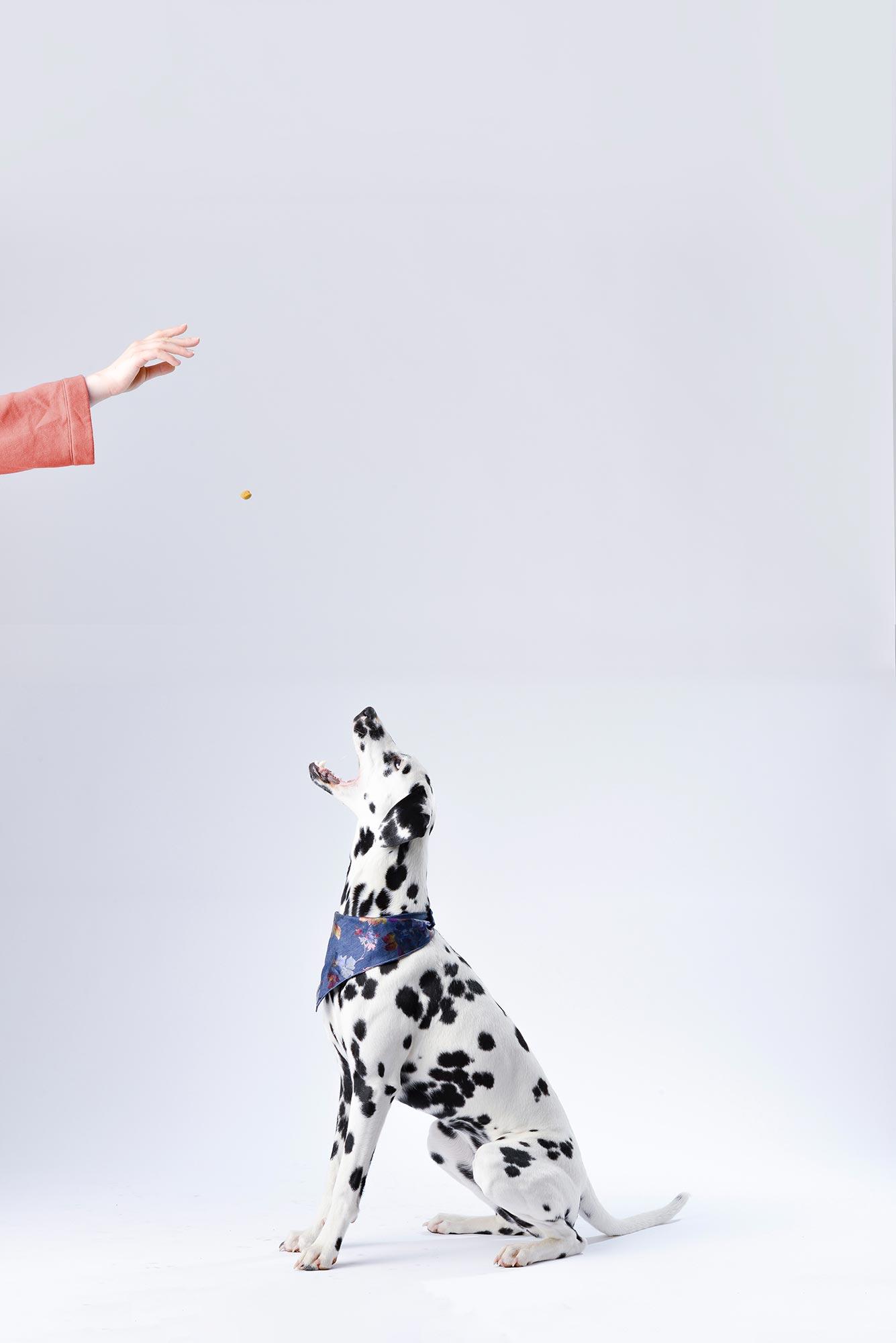Dog Expecting Treat
